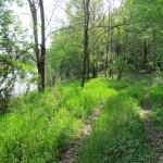 A csigás-erdő