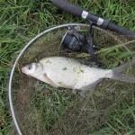 Az első hal