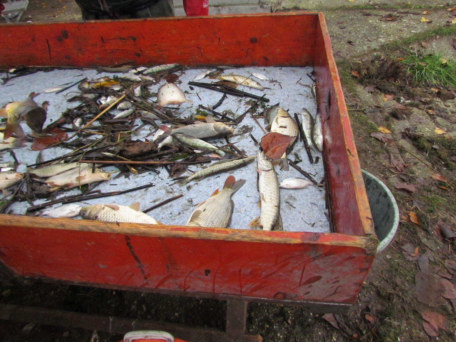Utolsó halak a válogatóasztalon