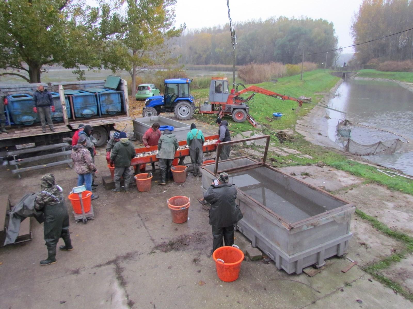 Halászat, válogatás